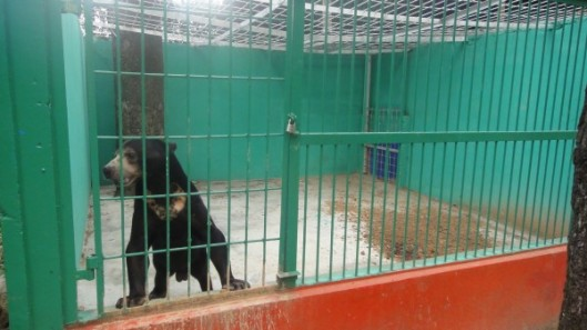 bear-enclosure-two-2-e1395492483640