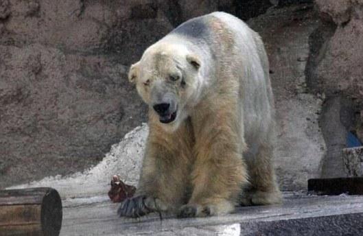 """Arturo é considerado o """"animal mais triste do mundo"""""""