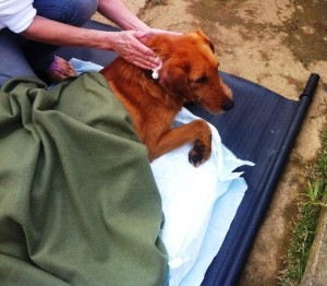 Super Dog quando foi resgatado