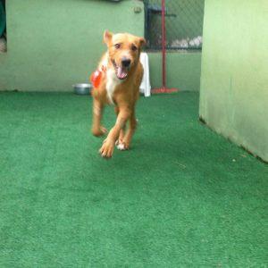 Super Dog recuperado e feliz