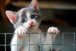 adotar-gatos