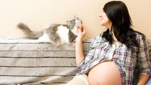 gato-gravidez-710x400